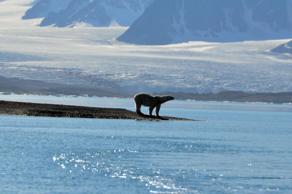 ijsbeer-landtong-spitsbergen