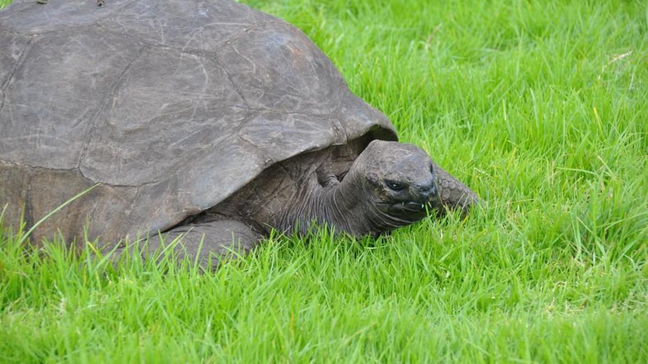 schildpad-st.-helena