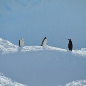 pinguins en ijsschots