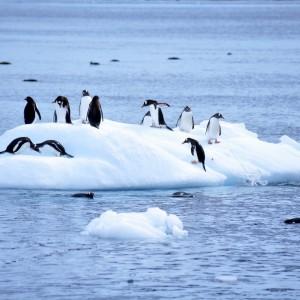 pinguins op ijsschots