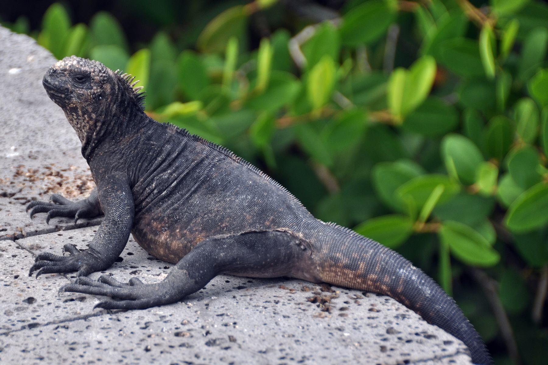 Galápagos eilanden zeilen