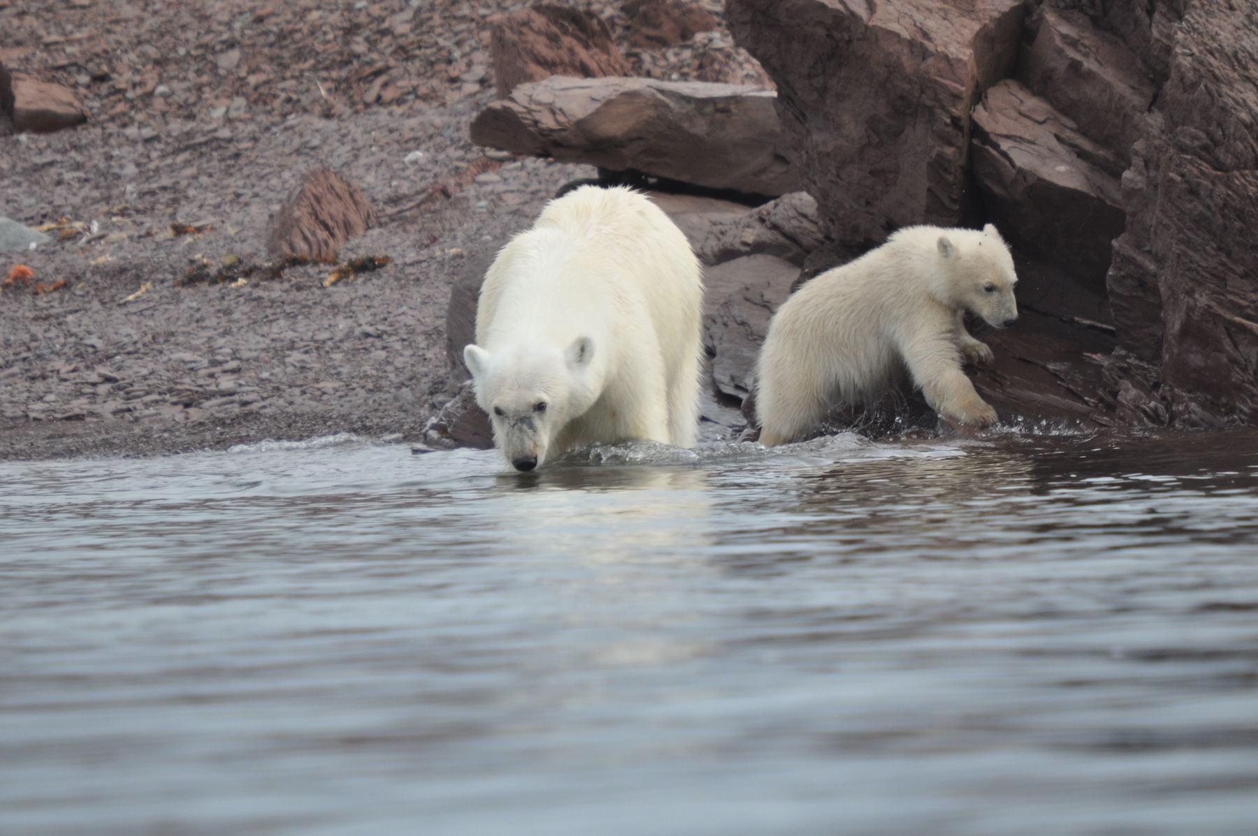 Spitsbergen met Anne-Margaretha IJsberen