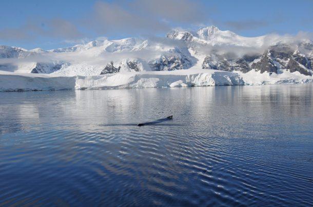 walvissen-in-antarctica-naast-anne-margaretha